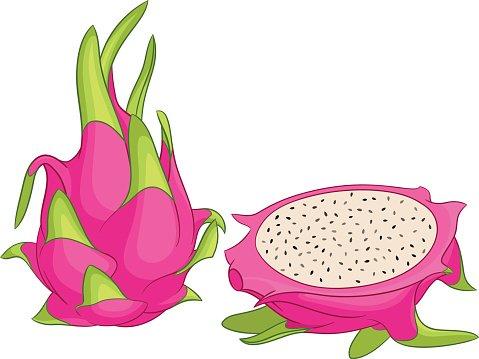 Dragon fruit vector illustration. Clipart Image.