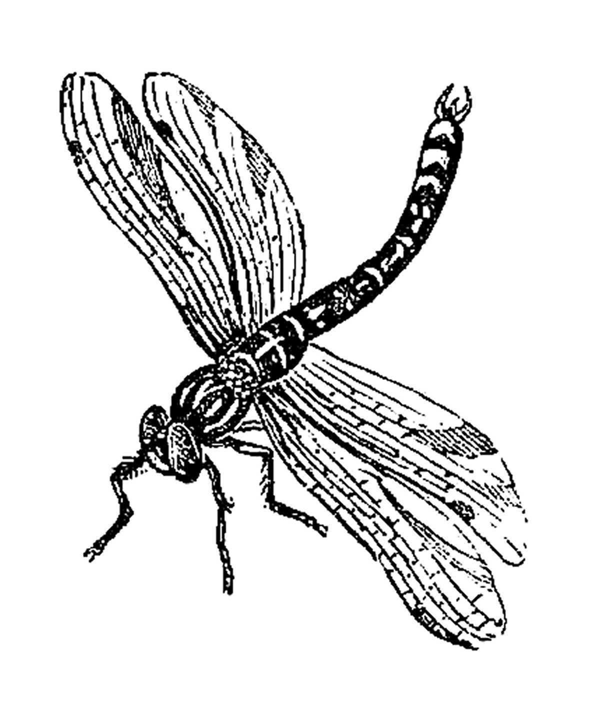Dragonfly black and white clipart 3 » Clipart Station.