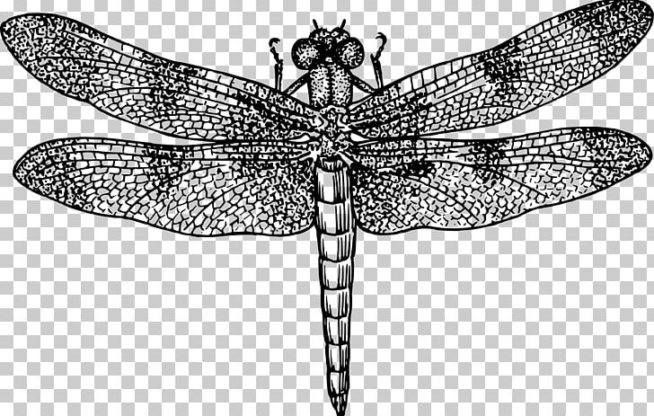 Dragonfly Black And White Drawing PNG, Clipart, Animal, Arthropod.