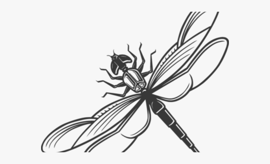 Dragonfly Clipart Scroll.