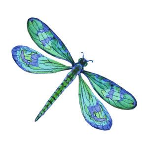 vector art, clip art, decorative panels, dragonfly, insect.