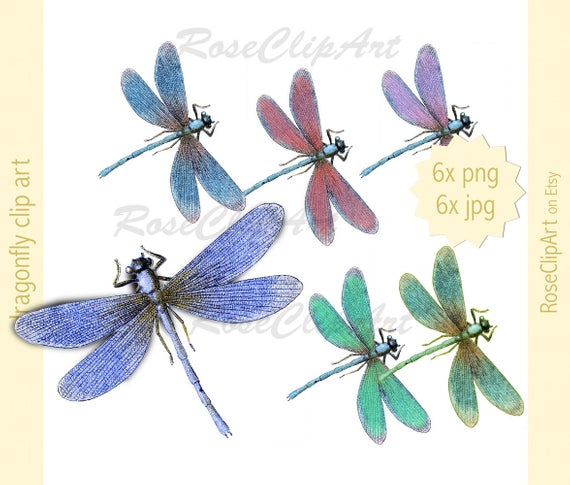 6x dragonfly clipart.