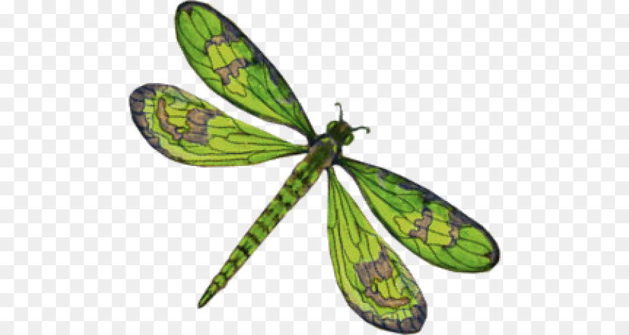 Butterfly Cartoon png download.