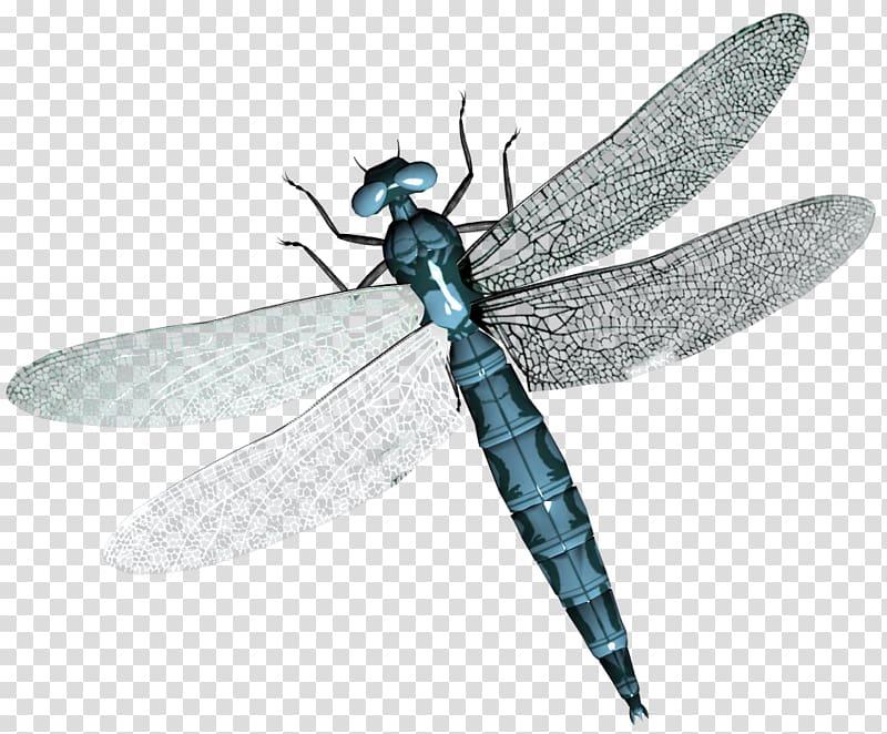 Butterfly Rick Riker Southern hawker Dragonfly Birdwing.
