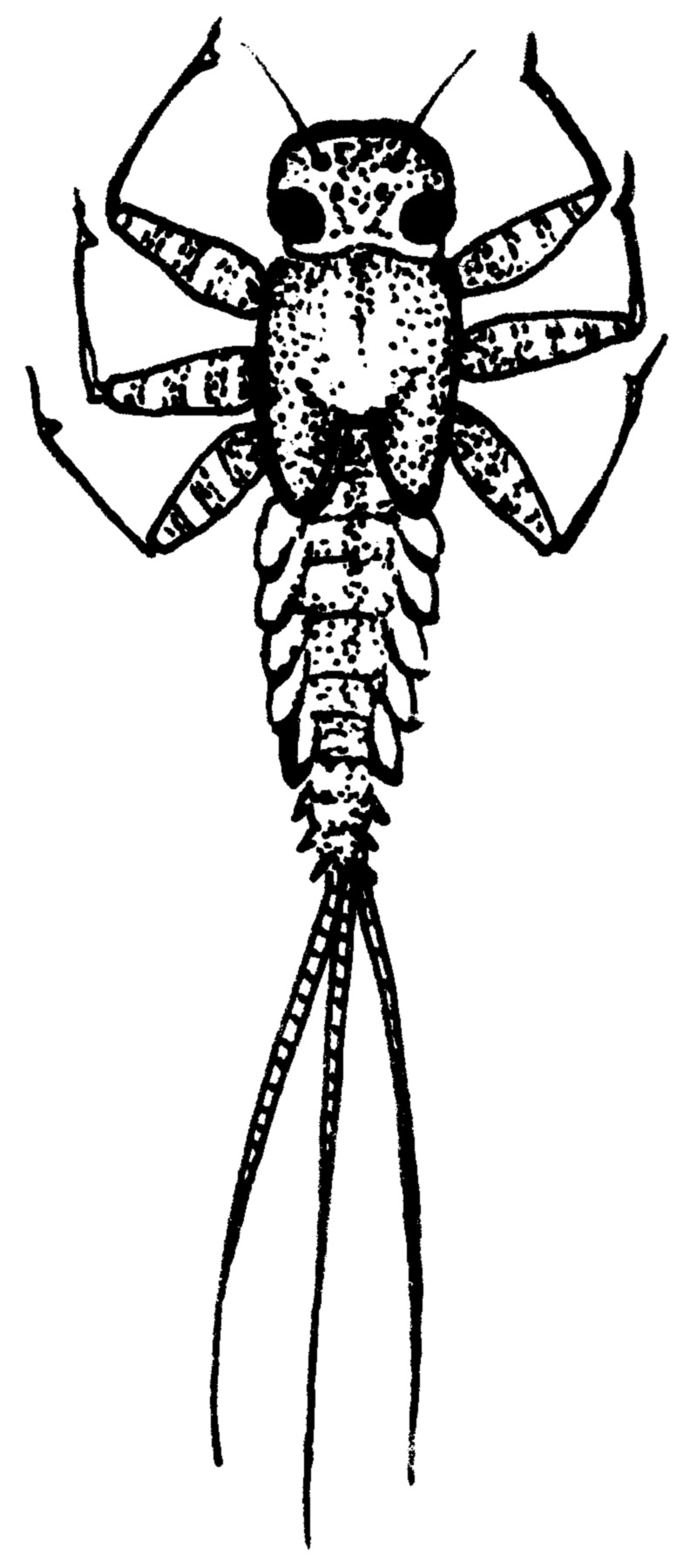 Dragonfly Larva Clipart Clipground