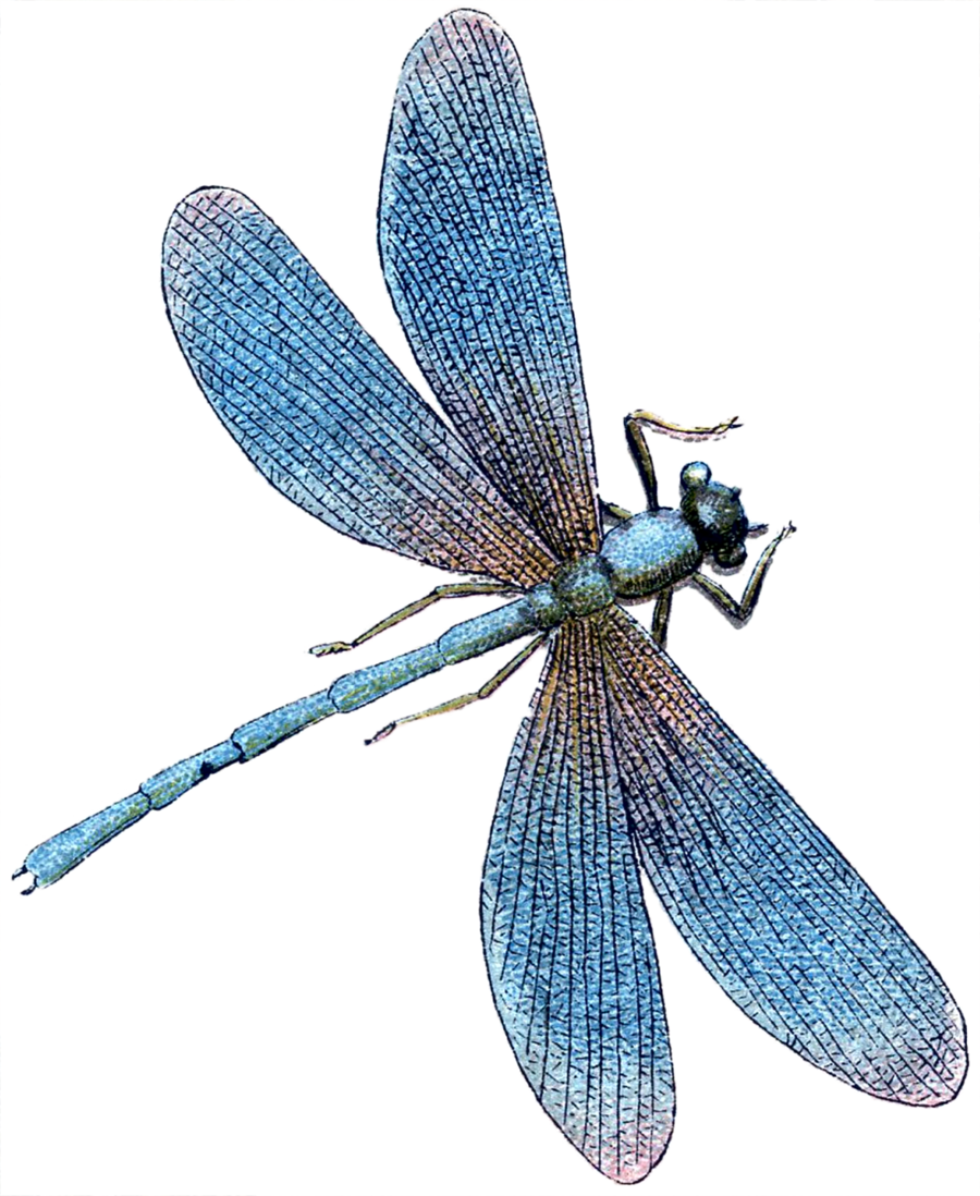 turquoise dragonfly clipart Dragonfly Tile Turquoise clipart.