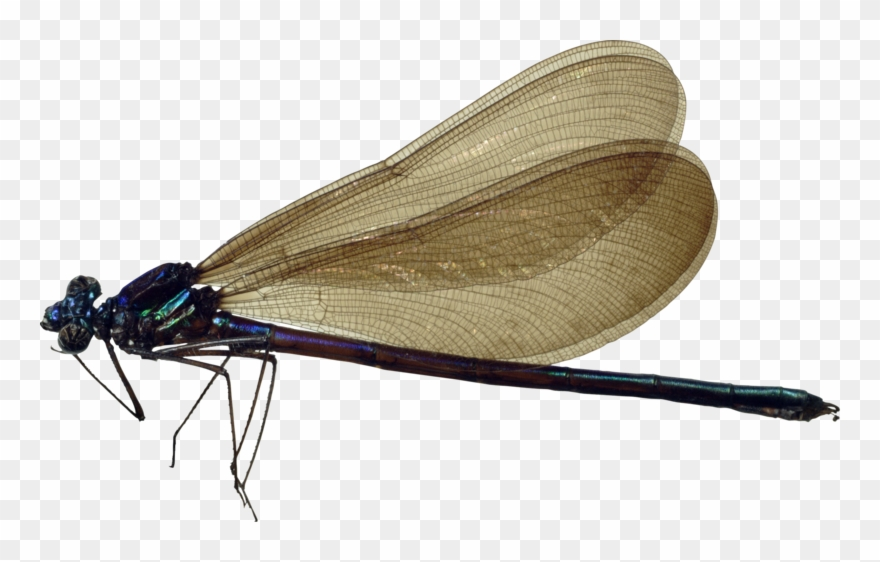 Dragonfly Transparent Images Png.
