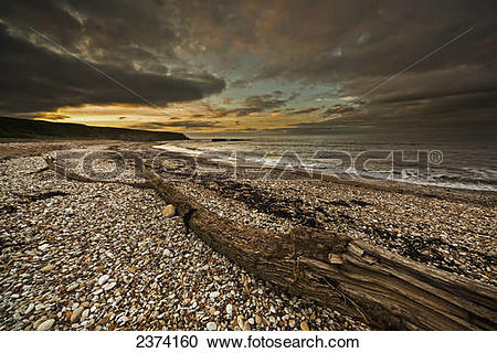 Stock Photography of Driftwood on a pebble beach at sunset with.