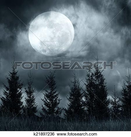 Stock Images of Magic landscape with pine tree forest under.