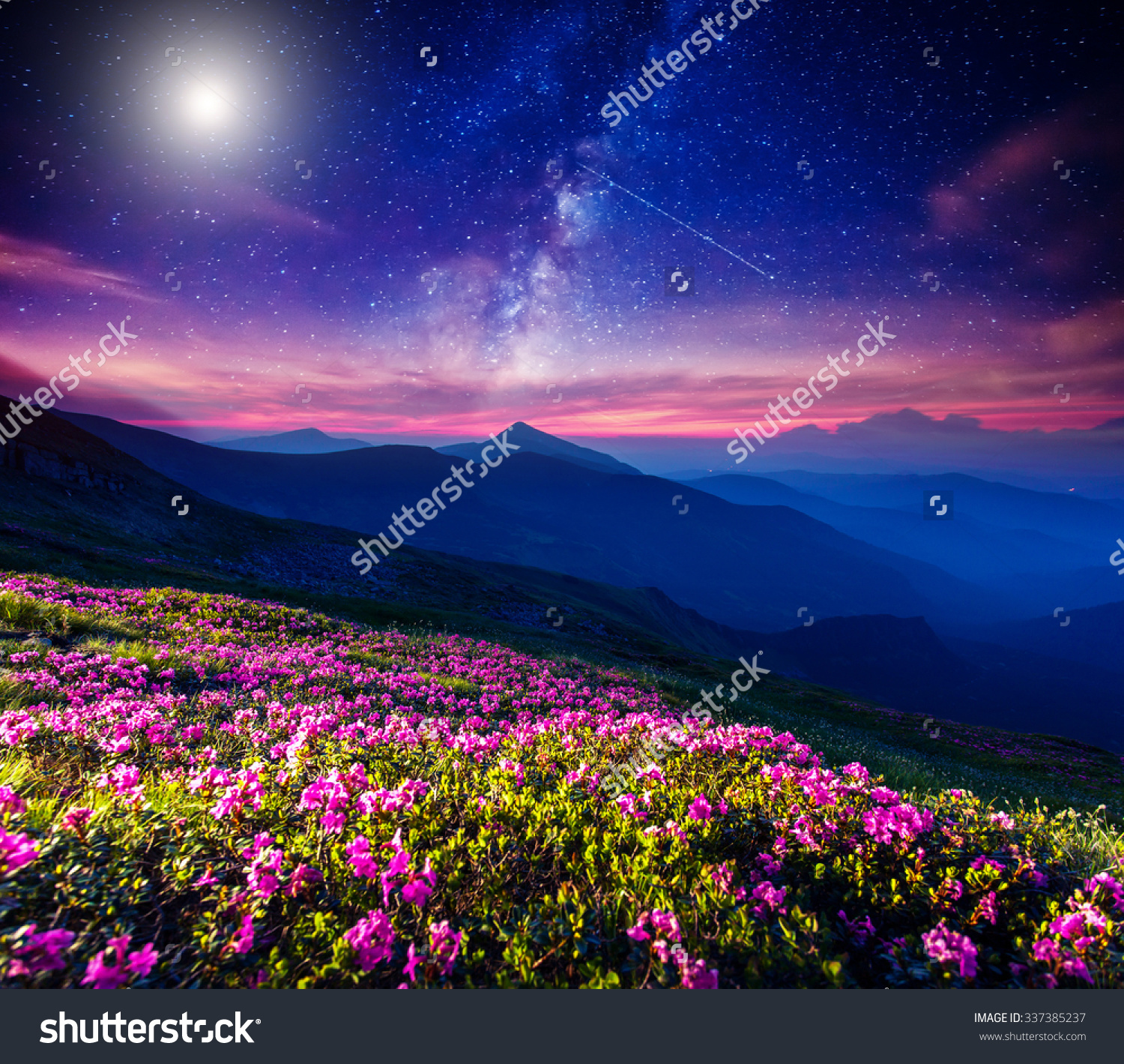 Great View Magic Pink Rhododendron Flowers Stock Photo 337385237.