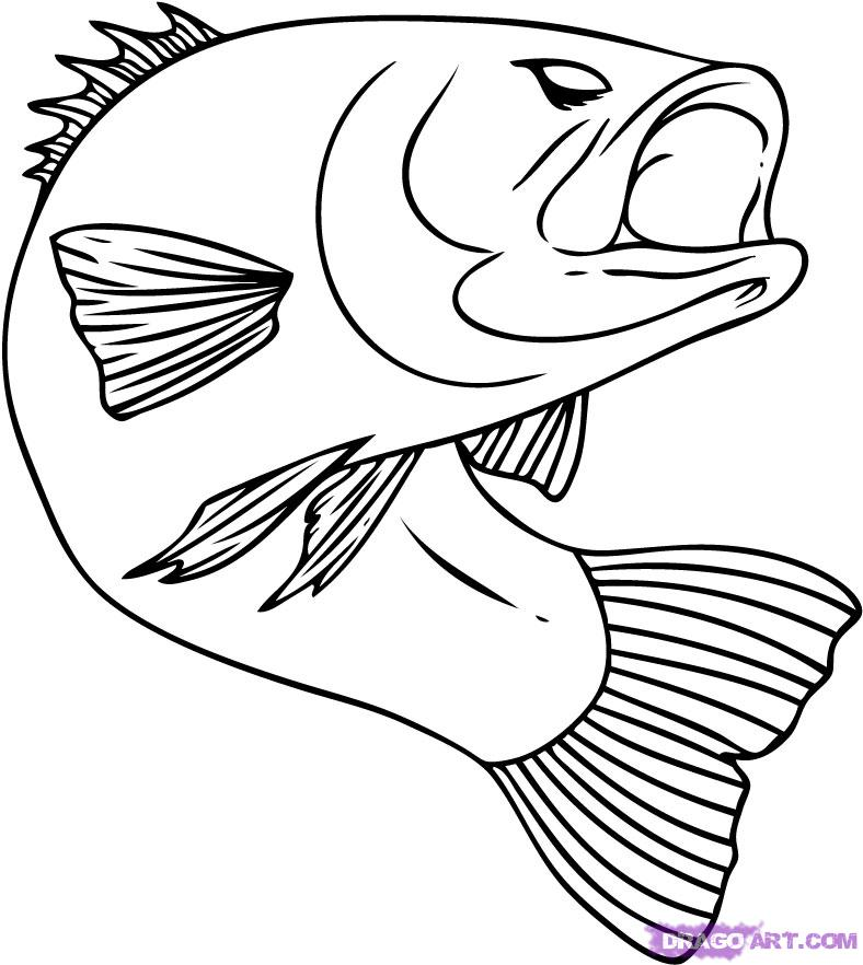 How to Draw a Bass, Step by Step, Fish, Animals, FREE Online.