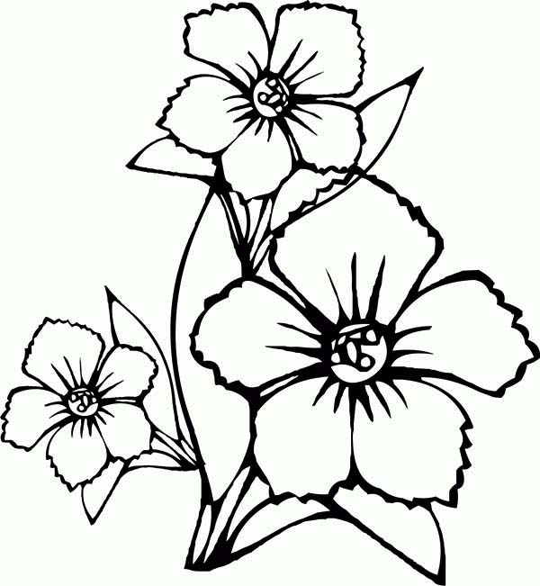 Free Drawing Of Flowers, Download Free Clip Art, Free Clip.