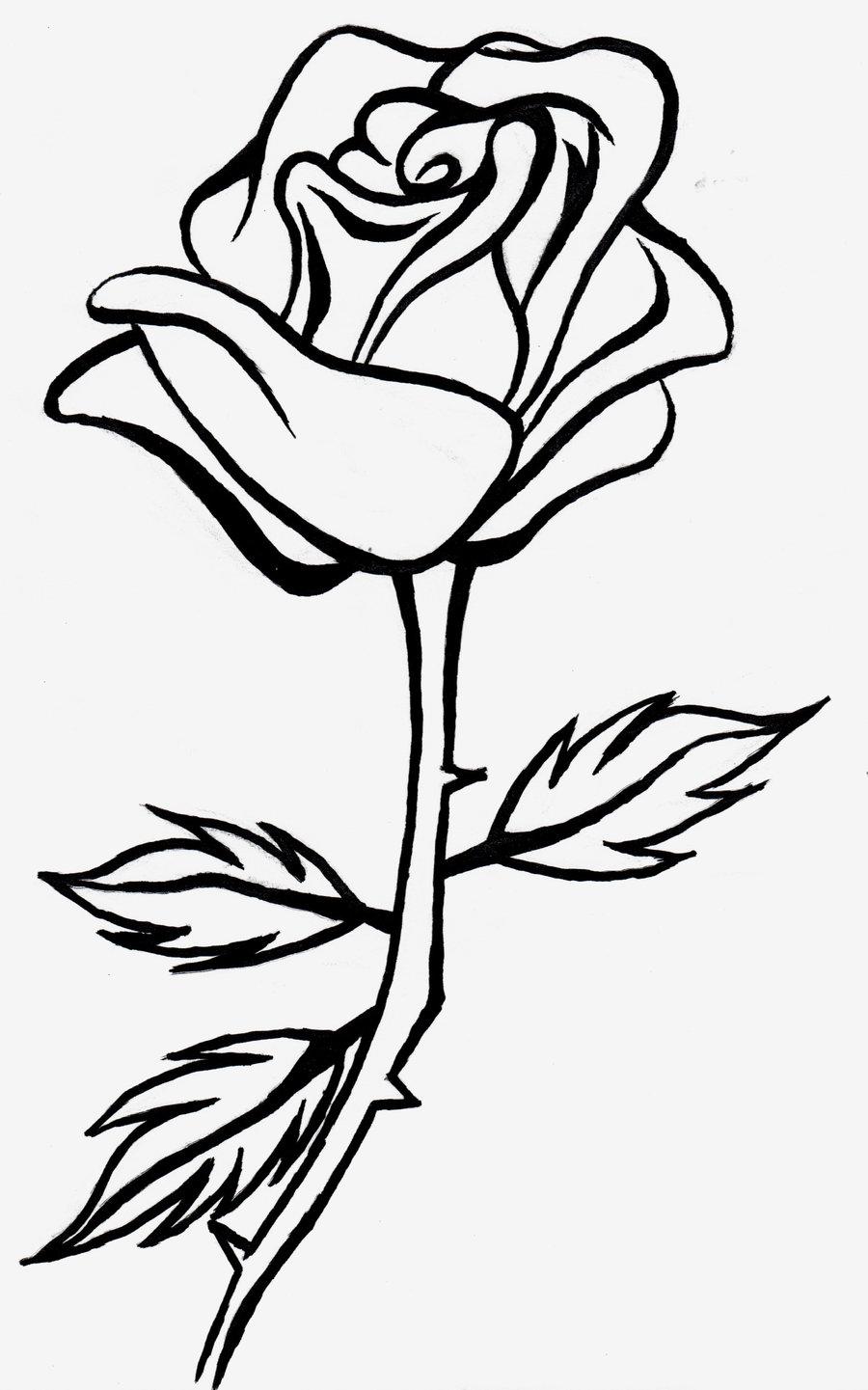 Rose Flower Drawing.