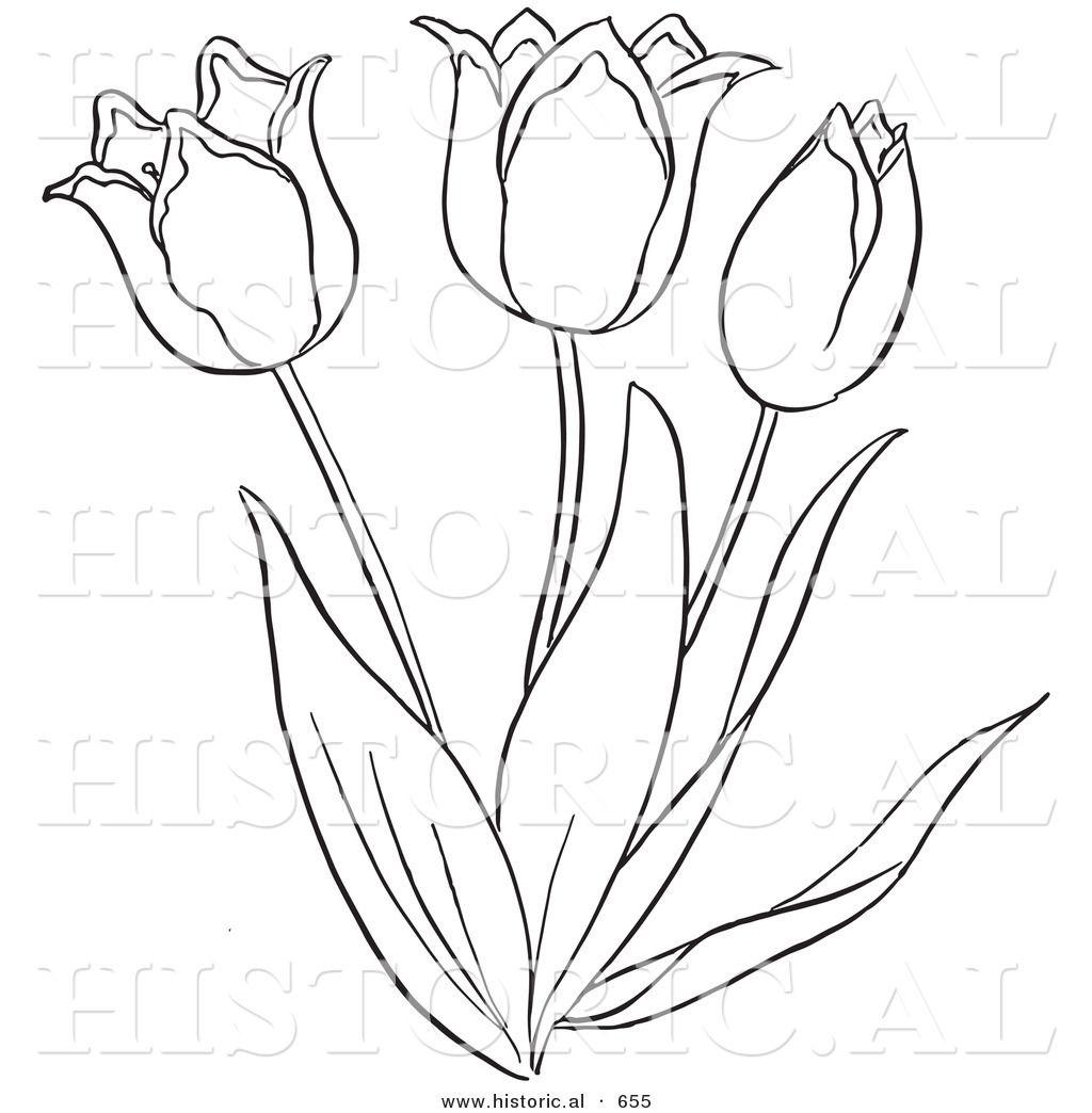 Tulip Flower Outline.