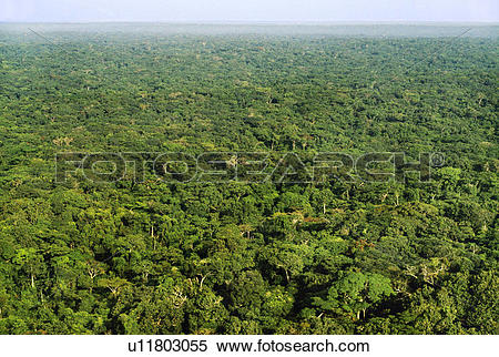 Stock Image of Tropical rainforest (aerial), Congo, DRC.