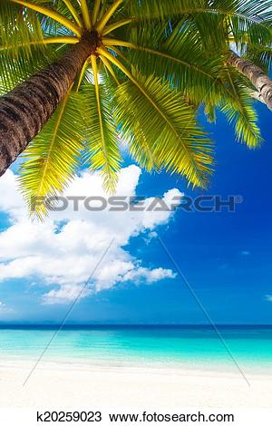 Stock Photo of Dream scene. Beautiful palm tree over white sand.