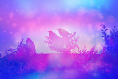 Dreamy Scene Starlings Blue Pink Stock Illustrations.