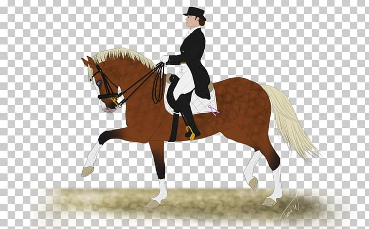 Hunt Seat Stallion Rein Horse Dressage PNG, Clipart, Animal.