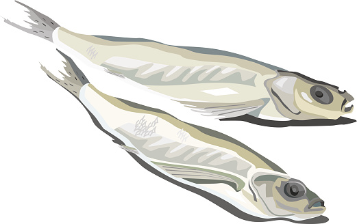 Dried Fish Clip Art, Vector Images & Illustrations.