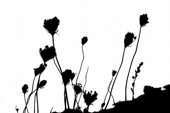 Dry Flower Clip Art.