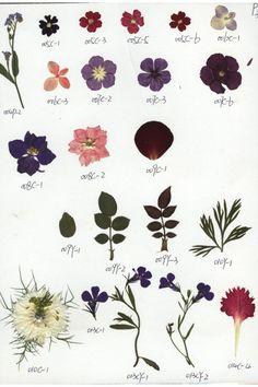 Pressed Flowers..