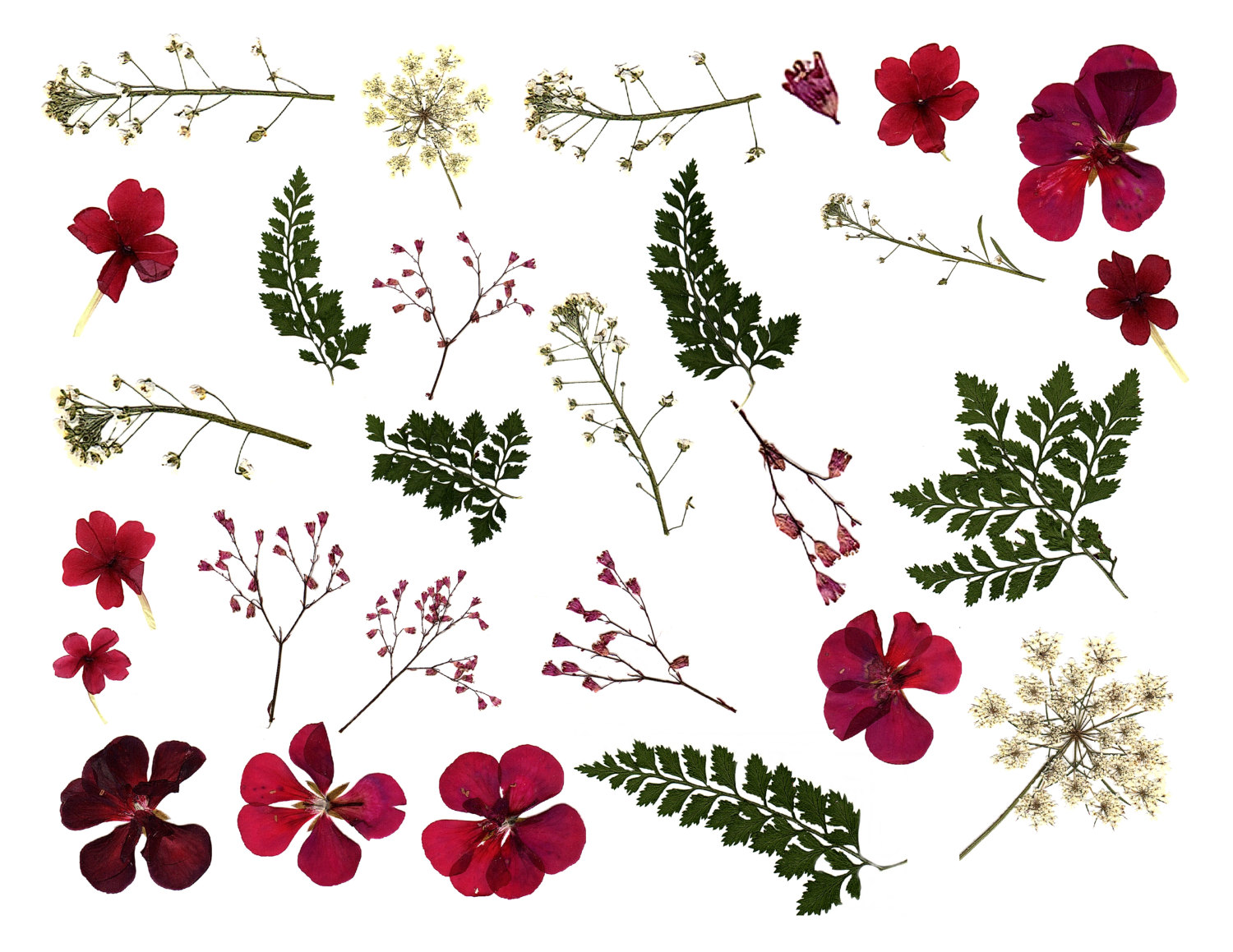 Dried flower clipart Clipground