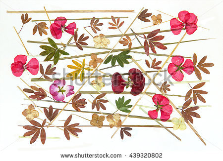 Dried Flowers Stock Photos, Royalty.