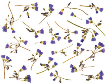 dried flowers.