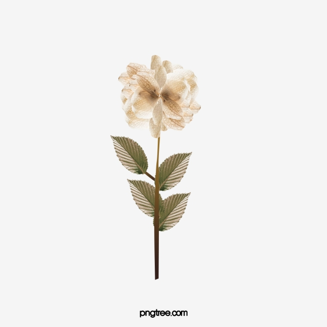 Dried Flowers PNG Images.