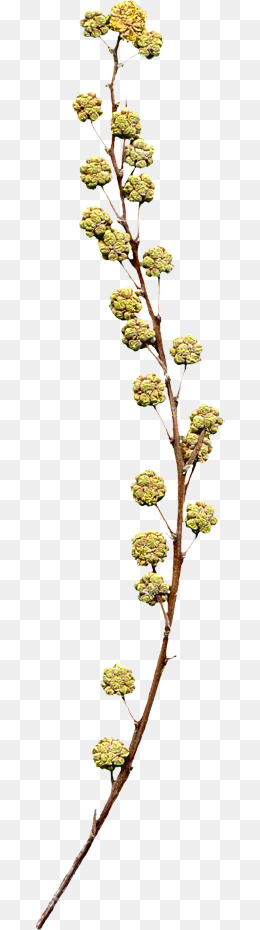 Dried Flowers Png, Vector, PSD, and Clipart With Transparent.