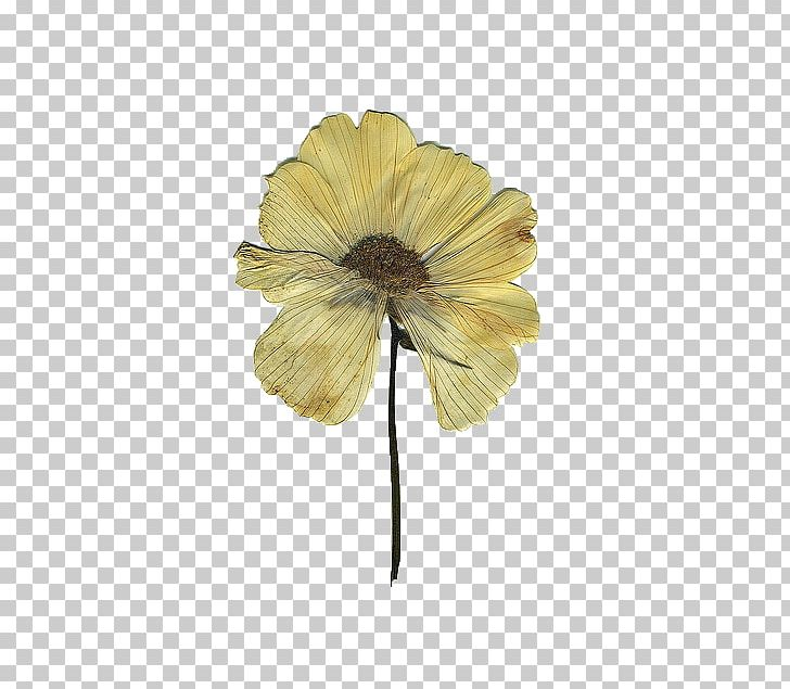 Pressed Flower Craft Floral Design Drawing PNG, Clipart, Art.