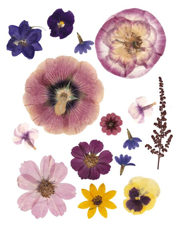 Digital pressed flowers.