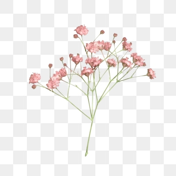 Dry Flower PNG Images.