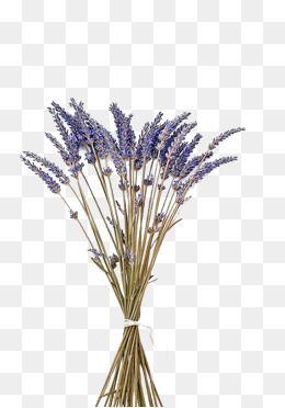 2019 的 Purple Lavender With Dried Flowers, Purple, Lavender, Dried.