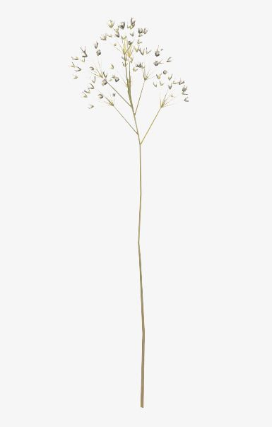Dried Flower Sticks, Flower Clipart, Free Buckle, Dried Branches PNG.