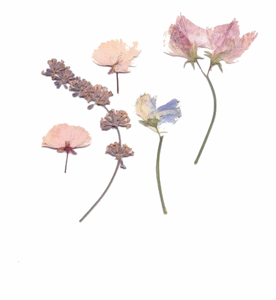 Dried Flowers Transparent Background, Transparent Png Download For.