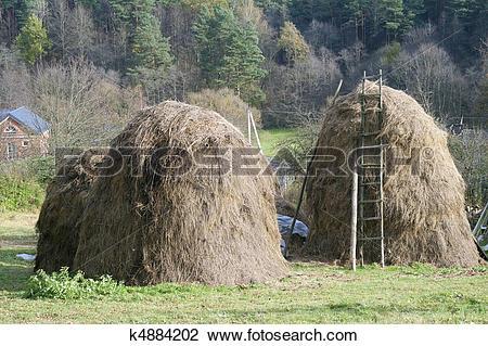 Stock Photo of Dry grass fodder in haystacks k4884202.