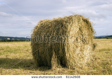 Dry Grass Roll In The Field Autumn Stock Photo 61142608 : Shutterstock.