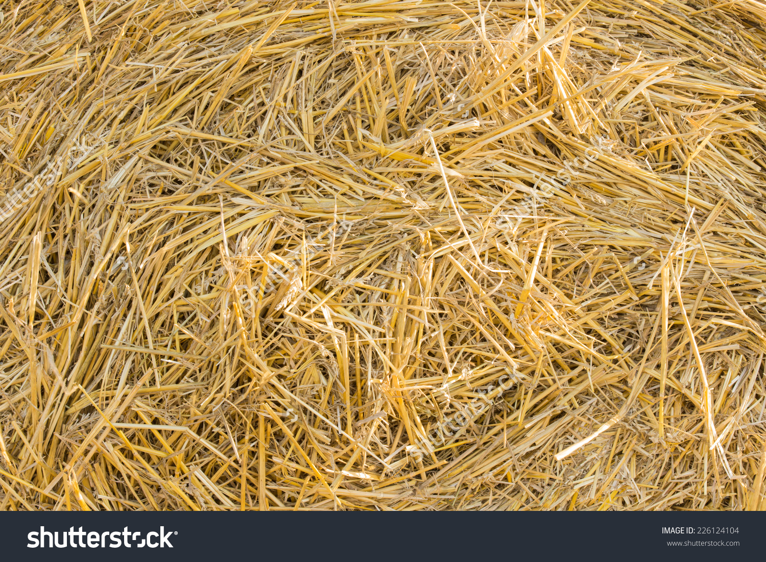 Background Texture Of Golden Stalks Of Fresh Dried Hay Cut For.