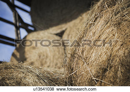 Pictures of Hay, dried grass and animal fodder, bales stacked in a.