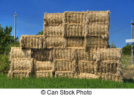 Stock Photo of Dry grass fodder in haystacks.