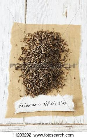 Stock Photo of Garden valerian (Valeriana officinalis), dried.
