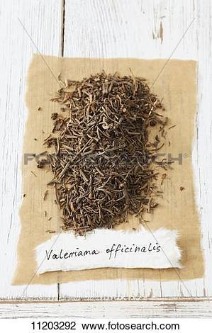 valeriana officinalis 15 ch