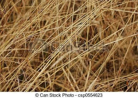 Stock Photos of dried weeds in the garden.