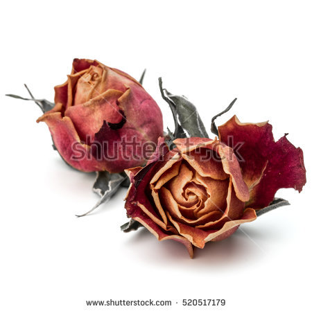 Dried Rose Stock Photos, Royalty.