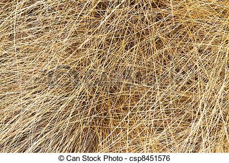 Stock Image of dried grass texture.