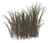Stock Images of Dead Grass k2120876.