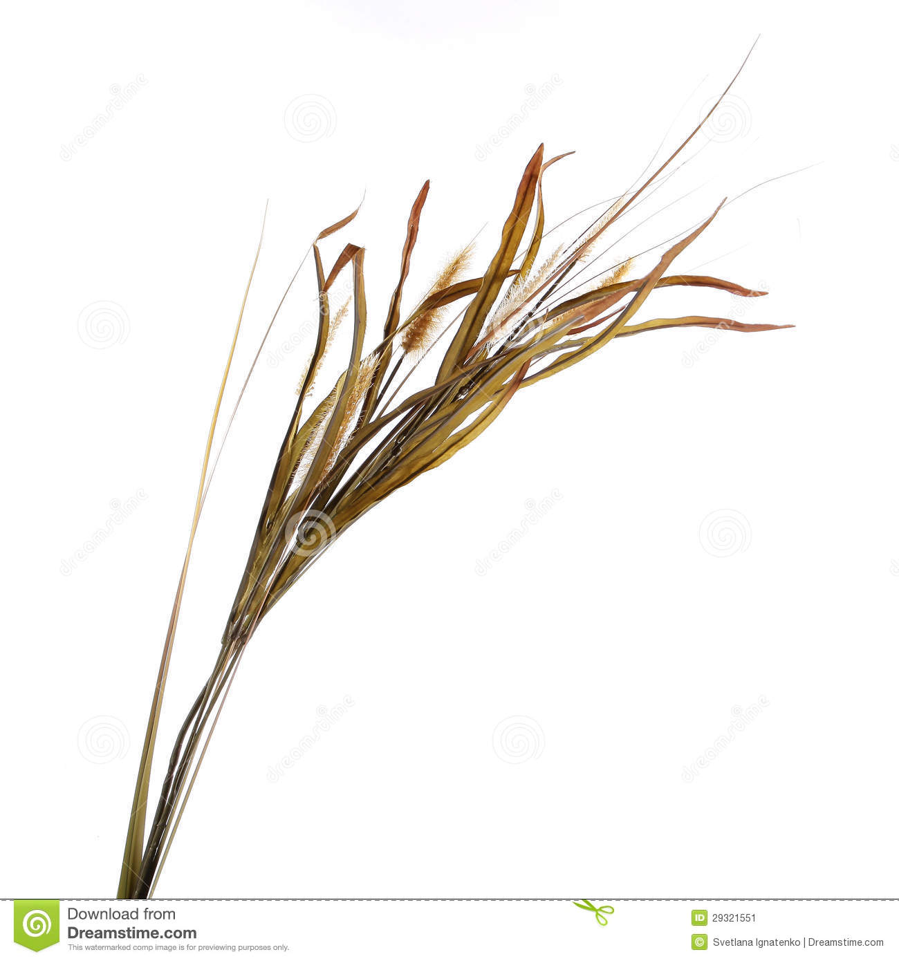 Dry grass clipart.