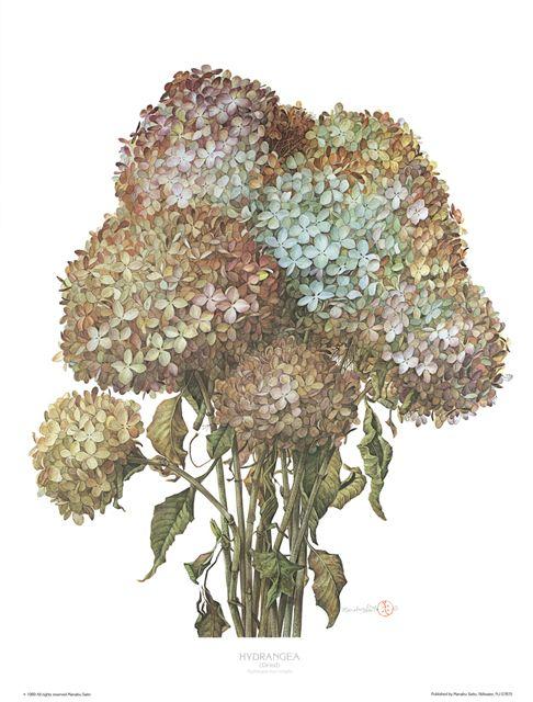 1000+ ideas about Hydrangeas For Sale on Pinterest.