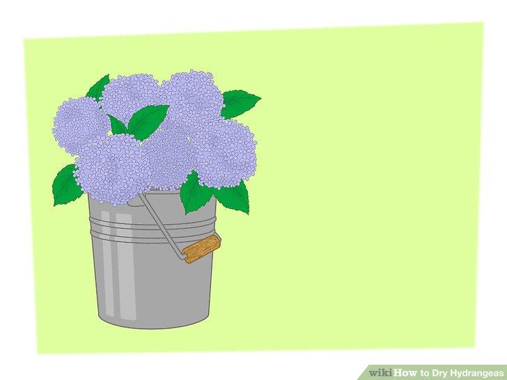 3 Ways to Dry Hydrangeas.